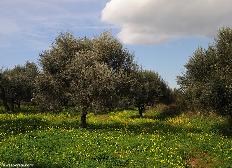 Self sustained holiday home westcretan holiday home rentals - Olive garden early bird specials ...